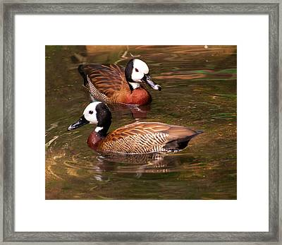 Framed Print featuring the digital art White-faced Whistling Duck by Chris Flees
