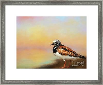 Ruddy Turnstone Framed Print by Suzanne Handel