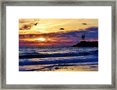 Rudee's Beauty Framed Print