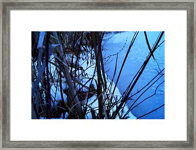 Rue From Ophelia Framed Print by Rahdne Zola