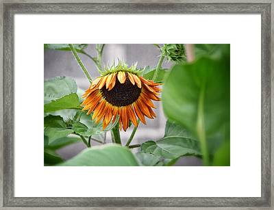 Rueful Framed Print