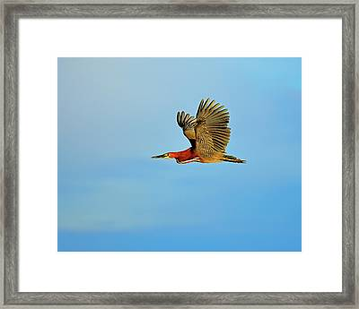 Rufescent Framed Print by Tony Beck
