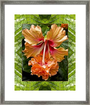 Framed Print featuring the photograph Ruffled Beauty by Bell And Todd