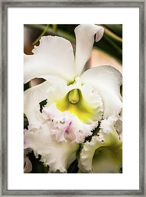 Ruffled Beauty Framed Print by Calazone's Flics