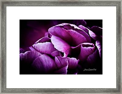 Framed Print featuring the photograph Ruffled Edge Tulips by Joann Copeland-Paul