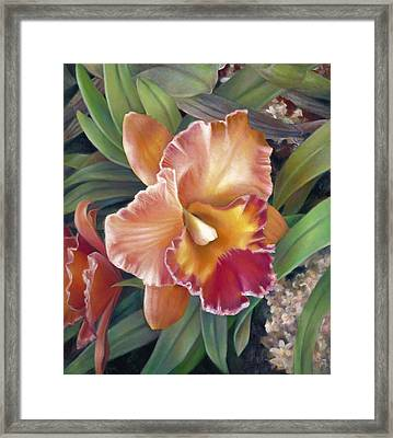 Ruffled Peach Cattleya Orchid Framed Print by Nancy Tilles