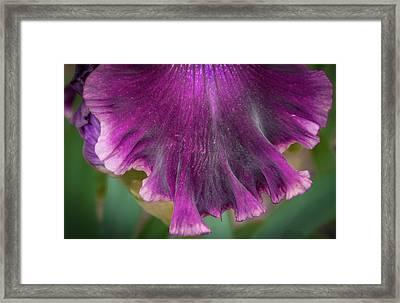 Ruffled Purple Iris Petal Framed Print