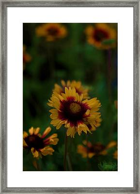 Framed Print featuring the photograph Ruffled Up by Cherie Duran