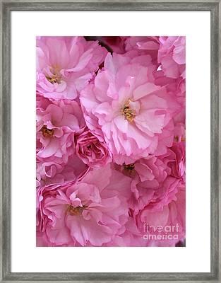 Ruffly Pink Blossoms Framed Print by Carol Groenen