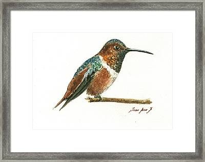 Rufous Hummingbird Watercolor Framed Print