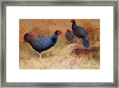 Rufous Tailed Crested Pheasant Framed Print by Joseph Wolf
