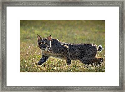 Rufus Framed Print by Amy Porter