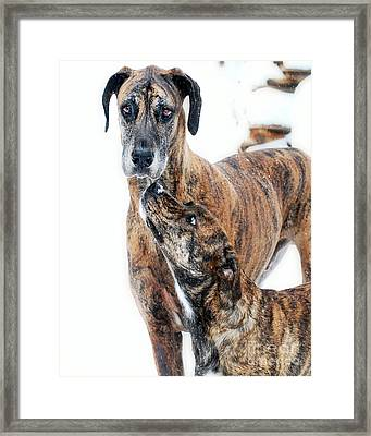 Framed Print featuring the photograph Rufus And Ava by Lila Fisher-Wenzel