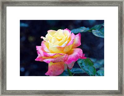 Rugelda Framed Print by Don  Wright