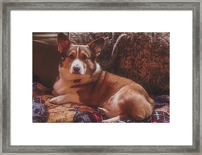 Rukky's Winter Pose 2016 Framed Print