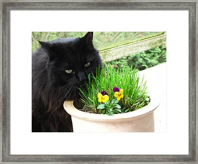 Framed Print featuring the photograph Rumbles Eating Grass by AJ Brown