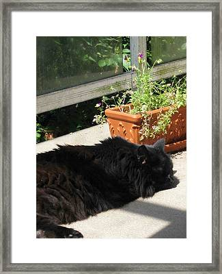 Framed Print featuring the photograph Rumbles In The Sun by AJ Brown