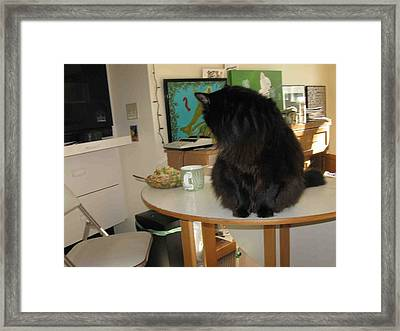 Rumbles Looks At Lunch Framed Print