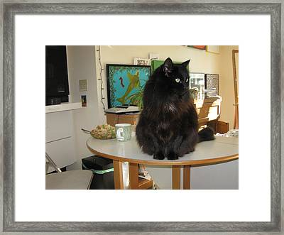 Framed Print featuring the photograph Rumbles Looks Left by AJ Brown