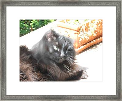 Framed Print featuring the photograph Rumbles Shakes Her Head by AJ Brown