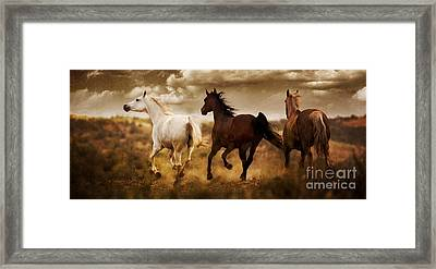 Run For The Hills Framed Print by Patty Hallman