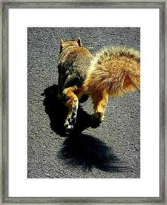 Runaway Fox Squirrel Framed Print by Beth Akerman