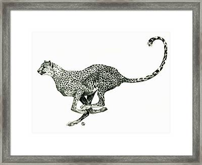 Running Cheetah Framed Print