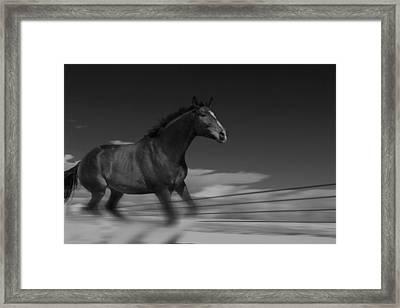 Running Free Framed Print by Angie Wingerd
