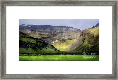 Running Horses Iceland Framed Print by Louise Fahy