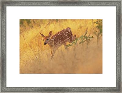 Running In Sunlight Framed Print