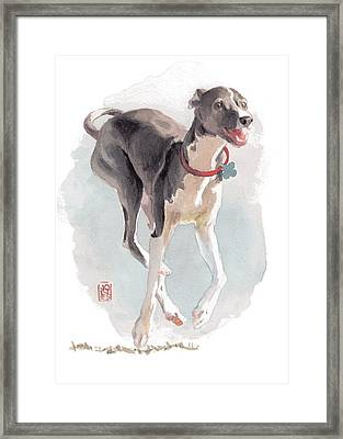 Running Italian Framed Print by Debra Jones