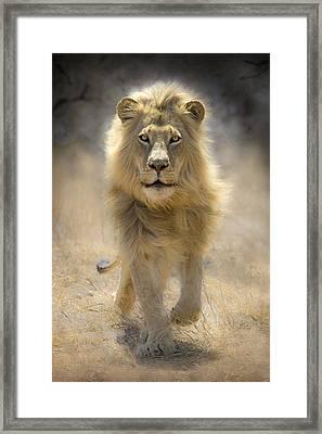 Running Lion Framed Print by Stu  Porter