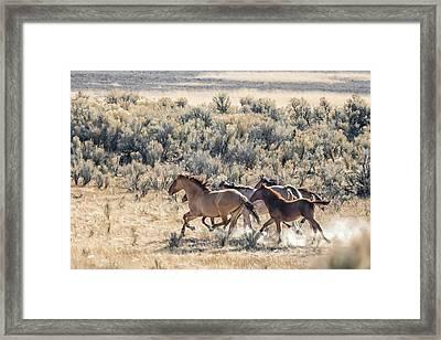 Running Mustangs, No. 1 Framed Print