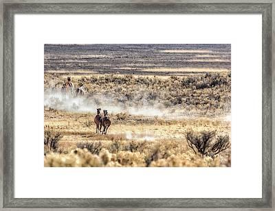Running Mustangs, No. 3 Framed Print