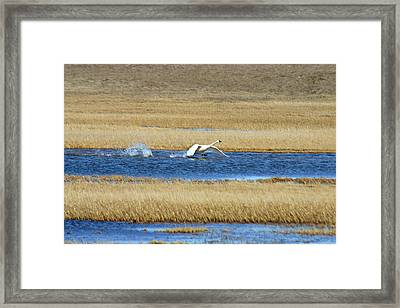 Running On Water Framed Print