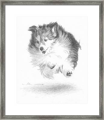 Running Sheltie Pencil Porrait Framed Print by Mike Theuer