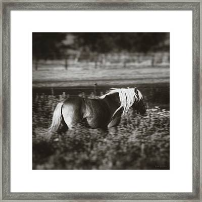 Running Wild Framed Print