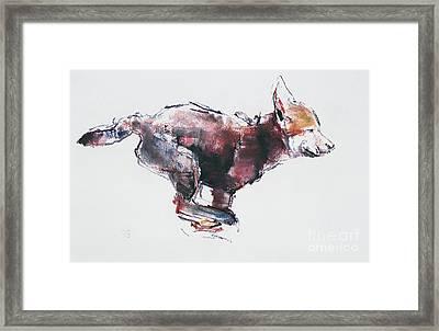 Running Wolf Pup Framed Print by Mark Adlington