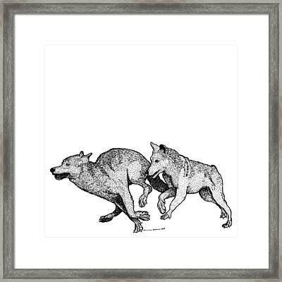 Running Wolves Framed Print by Karl Addison