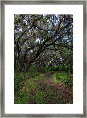Runnymede Live Oaks Framed Print
