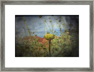Framed Print featuring the photograph Runt  by Mark Ross