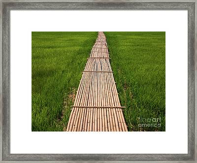 Rural Green Rice Fields And Bamboo Bridge. Framed Print by Tosporn Preede