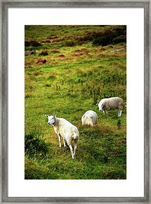 Framed Print featuring the photograph Rural Idyll. Wicklow. Ireland by Jenny Rainbow