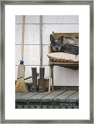 Rural Living.. Framed Print