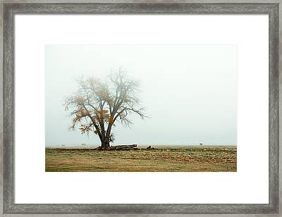 Rural Pasture And Tree Framed Print by Todd Klassy
