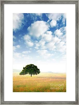 Rural Scene Framed Print by Carlos Caetano