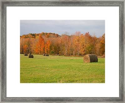 Rural Scene Framed Print by Raju Alagawadi