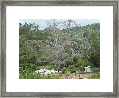 Rural Scenery Framed Print