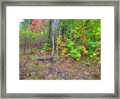 Rural Tyler County Landscape Framed Print by Terry  Wiley