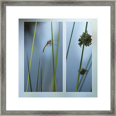 Rushes And Dragonfly Framed Print